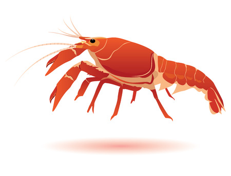 lobster shrimp vector design Illustration