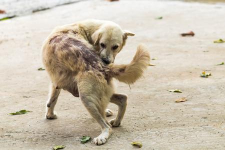 lepra: Las mordeduras de perro de vuelta porque la lepra