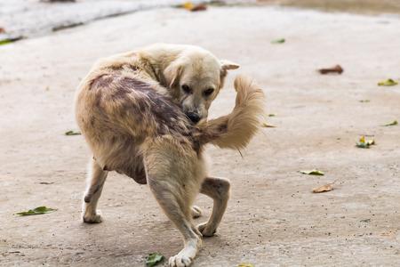 lepra: Dog bites back because leprosy Foto de archivo