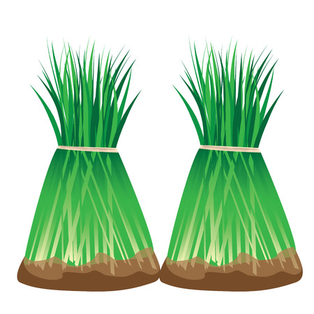 seeding plant vector design Illustration