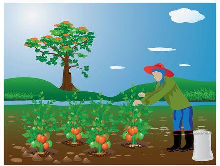 agricultor de tomate estiércol de diseño de la planta de vectores
