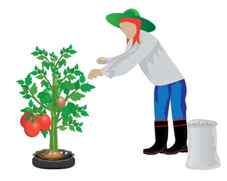 tomato plant: agriculturist manure tomato plant vector design