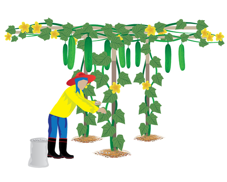 agriculturist manure cucumber plant vector design