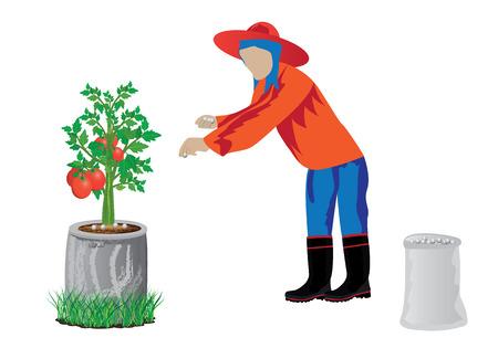 agriculturist manure tomato plant vector design