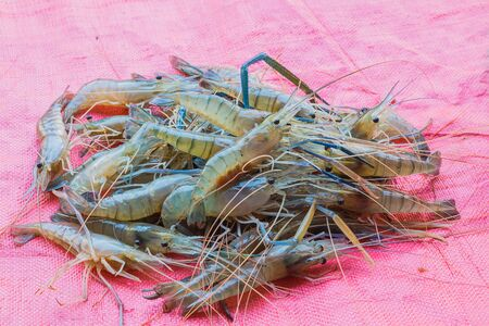 fresh shrimp on sack background Stock Photo