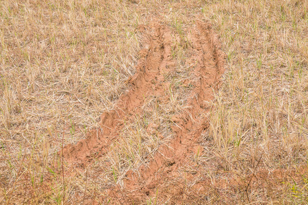 trace of truck in paddy field Stock Photo
