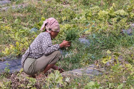 pluck: agriculturist pull grass from vegetable garden Stock Photo