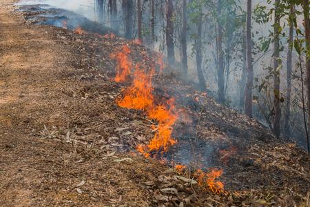 quemadura: bosque arda