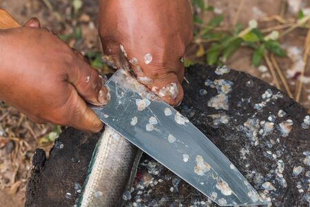 striped snakehead fish: remove fish scale by knife