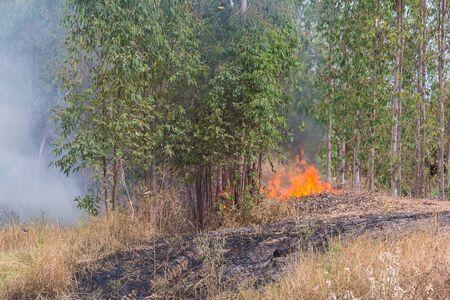 quemadura: fire burn forest