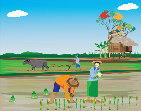 Planting rice in the field. Illustration
