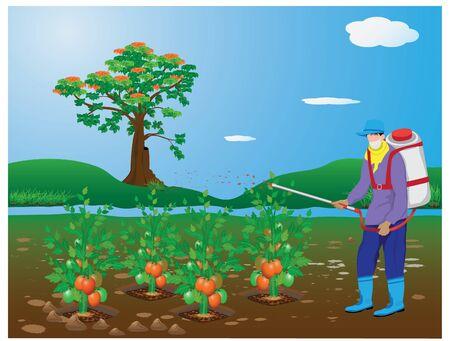 agriculturist spray tomato plant vector design