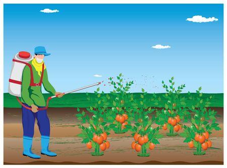 tomato plant: agriculturist spray tomato plant vector design