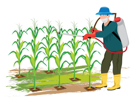 Agriculturist sprays corn plant vector design.