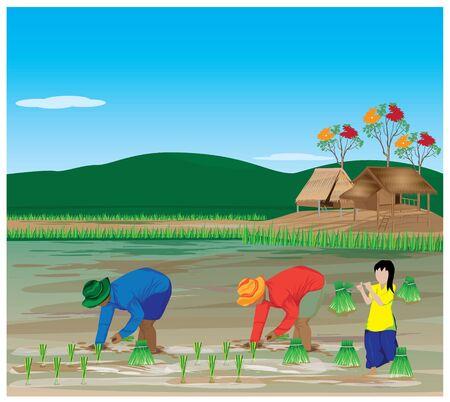 Farmer transplant rice vector design.