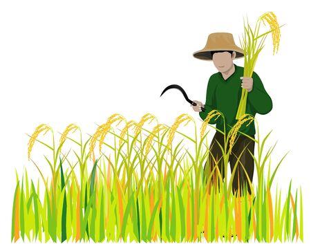 Farmer harvest rice vector design.