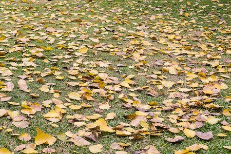 many leaf on floor Stock Photo
