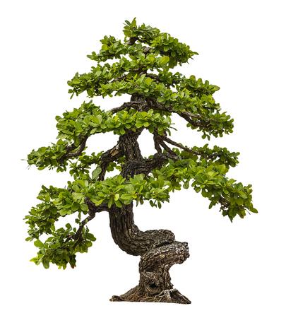 白い背景の上の緑の木 写真素材