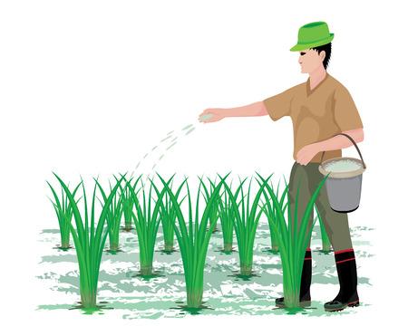 boer mest rijstplant vector design