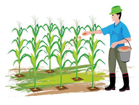 Illustrazione di progettazione vettoriale pianta di mais di fertilizzante agricoltore.