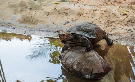 turtle in zoo Stock Photo