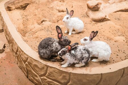 lovely rabbit