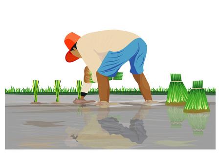farmer transplant rice seeding vector design Illustration