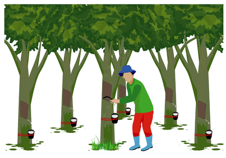 Agriculturist cut rubber tree vector design Illustration