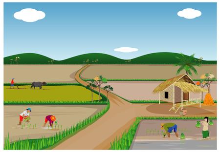 boer transplantatie rijst zaaien vector design Stock Illustratie