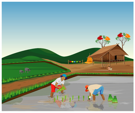 farmer transplant rice seeding vector design Иллюстрация