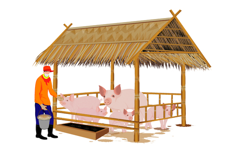 Agriculturist give food to pigs  design Illustration