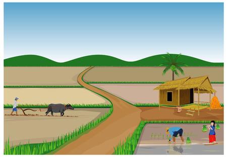 farmer transplant rice seeding vector design Ilustração