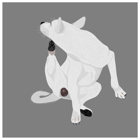 White dog scratch chin vector design Illusztráció
