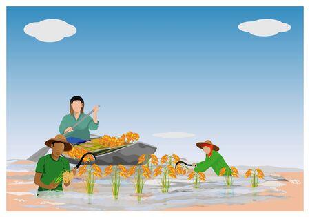 Farmer harvest rice in flood vector design Illustration