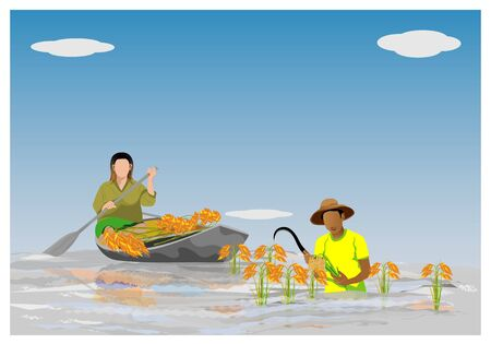 farmer harvest rice in flood vector design