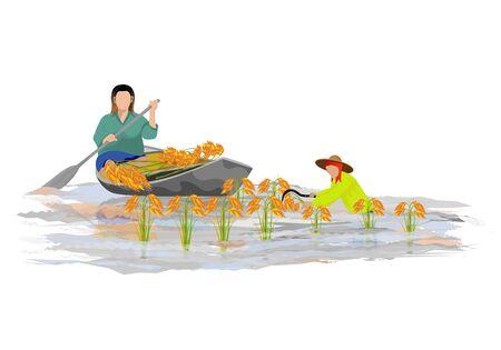 farmer harvest rice in flood vector design Фото со стока - 90822518