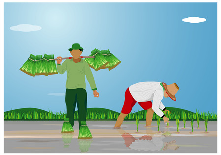 farmer transplant rice seeding vector design Illustration