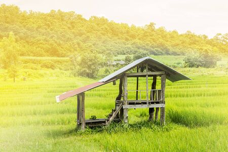 small hut in paddy field