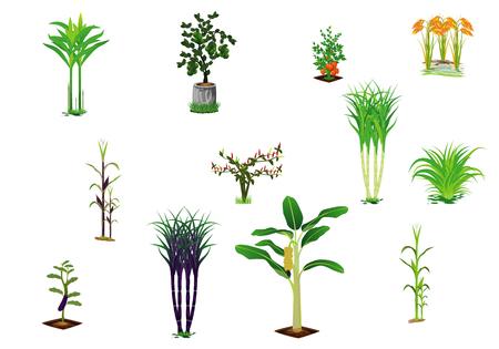 kind of vegetable vector design