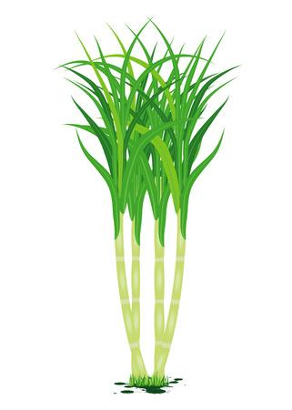 sugarcane plant vector design Stock Vector - 89989573