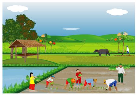 Illustration des agriculteurs plantant du riz dans les rizières. Banque d'images - 90864290