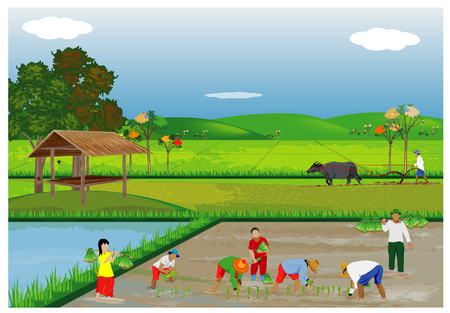 Illustration of farmers planting rice in paddy field. Stock fotó - 90864290