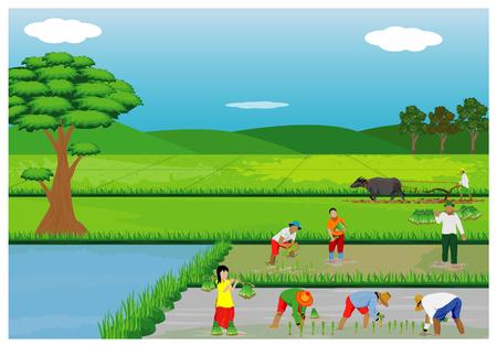 Ilustracja rolnicy zasadza ryż w irlandczyka polu.