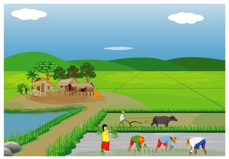 Illustration von den Landwirten, die Reis im Reisfeld pflanzen. Vektorgrafik