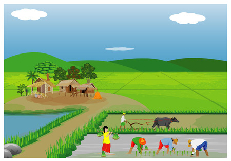 Illustration of farmers planting rice in paddy field.