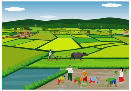 Illustration des agriculteurs plantant du riz dans les rizières. Banque d'images - 90864407