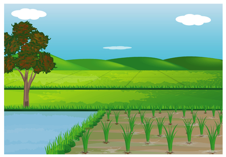 Illustration of paddy fields design.
