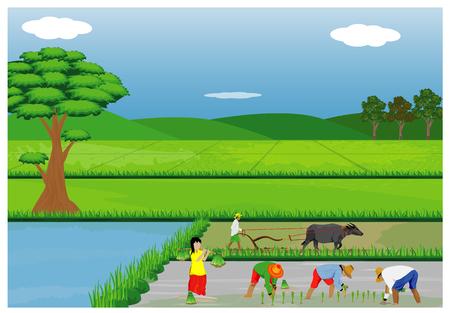 Illustratie van landbouwers die rijst op padiegebied planten. Stock Illustratie