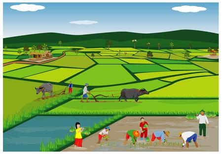 Illustration des agriculteurs plantant du riz dans les rizières. Banque d'images - 90864486