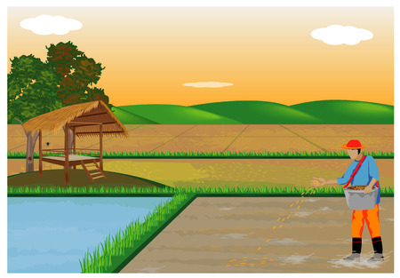 farmer sow rice in paddy field vector design
